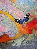 clarejay_butterfly