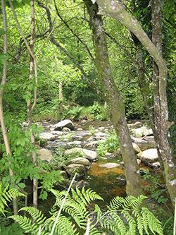 Dartmoor: Clare Jay