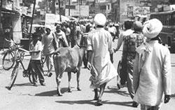 Walking in India: Bryan Johnson
